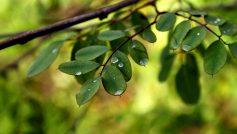 Обои листья, листочки, Макро, ветки, вода, роса, капли