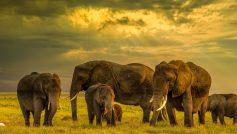 Обои вечер, закат, Африка, слоны, слоненок, семья для рабочего стола